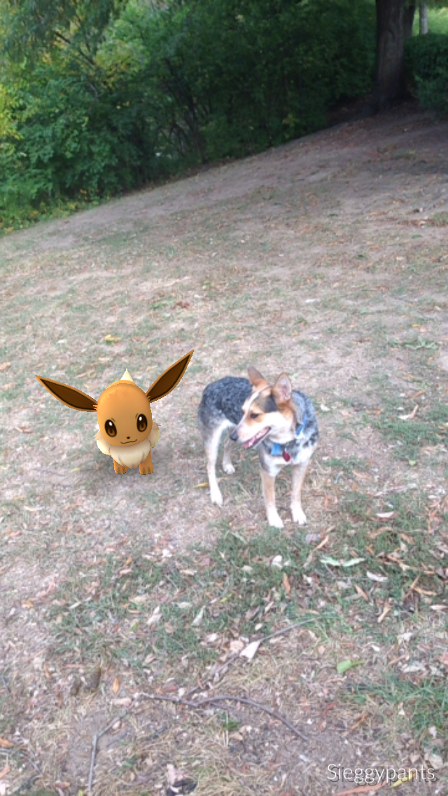 Anytime I Would Get To Stressed I Would Take A Break To Walk My Dog Charlie, And Play A Little (okay, A Lot) Of Pokemon Go! Aren't They Besties??